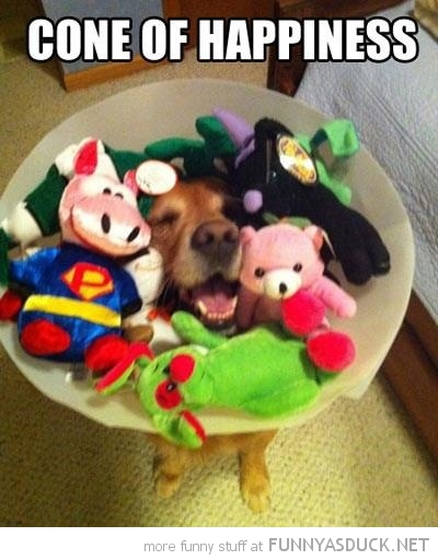 smiling happy dog vet cone toys happiness animal funny pics pictures pic picture image photo images photos lol
