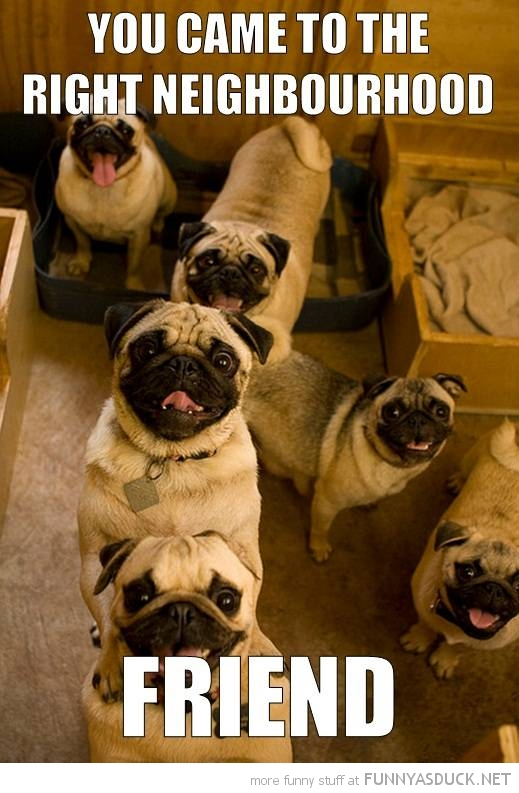happy pug dog animal came right neighborhood friend funny pics pictures pic picture image photo images photos lol
