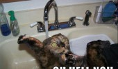 cat lolcat animal bath sink water scared hell no funny pics pictures pic picture image photo images photos lol