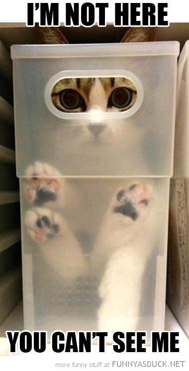i'm not here cat lolcat animal hiding plastic box can't see me funny pics pictures pic picture image photo images photos lol