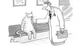 it's curiosity cat animal doctor vet comic funny pics pictures pic picture image photo images photos lol