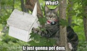 just pet them bird house animal cat lolcat tree funny pics pictures pic picture image photo images photos lol