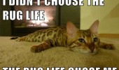 cat kitten animal lying floor rug life choose me funny pics pictures pic picture image photo images photos lol