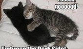 kittens cats animals hugging cuddling black embrace dark side star wars funny pics pictures pic picture image photo images photos lol