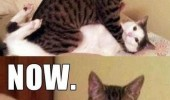 cat lolcat animal fighting sex leave now funny pics pictures pic picture image photo images photos lol