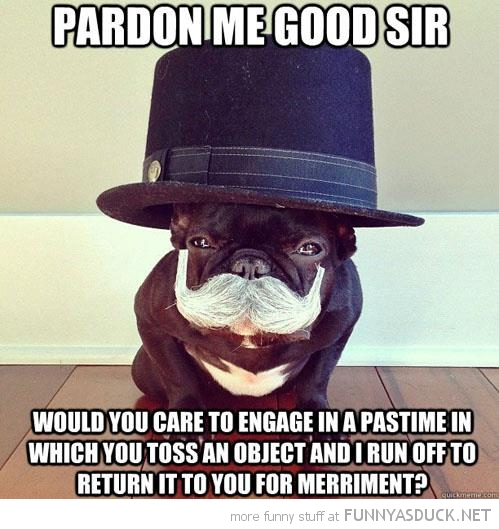 like sir dog animal top hat mustache pardon me throw ball funny pics pictures pic picture image photo images photos lol