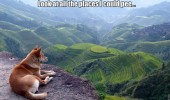 dog animal cliff look all places can pee hill funny pics pictures pic picture image photo images photos lol