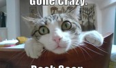 mad cat lolcat animal eyes gone grazy back soon funny pics pictures pic picture image photo images photos lol
