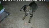 cat lolcat animal meet again red dot prepare die funny pics pictures pic picture image photo images photos lol