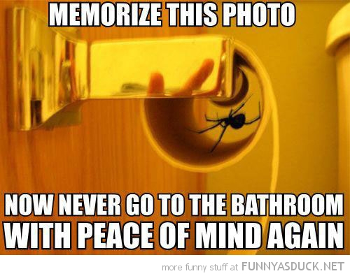 spider toilet roll memorize this peace mind again funny pics pictures pic picture image photo images photos lol