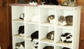 new ikea crazy cat lady organizer shelves lolcat animal funny pics pictures pic picture image photo images photos lol