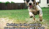 nothing friendlier wet dog animal running funny pics pictures pic picture image photo images photos lol