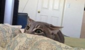 nothing good comes from this look cat lolcat animal bed peeking staring funny pics pictures pic picture image photo images photos lol