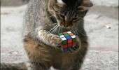 omg wtf cat lolcat animal holding rubix cube funny pics pictures pic picture image photo images photos lol