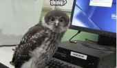 harry potter owl pc computer send email fly hogwarts animal funny pics pictures pic picture image photo images photos lol