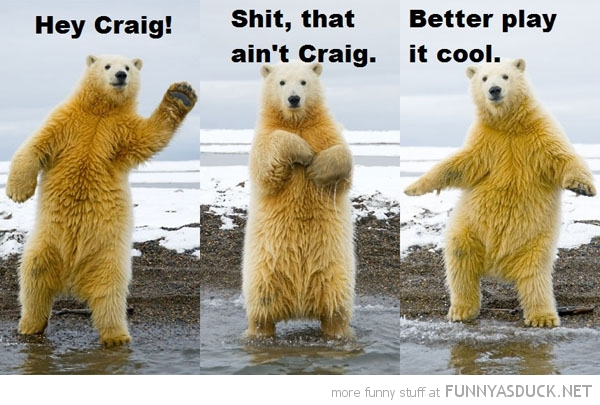 polar bear waving hey craig animal play it cool funny pics pictures pic picture image photo images photos lol