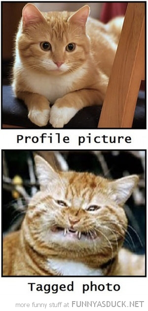 profile picture tagged photo cat lolcat animal facebook funny pics pictures pic picture image photo images photos lol