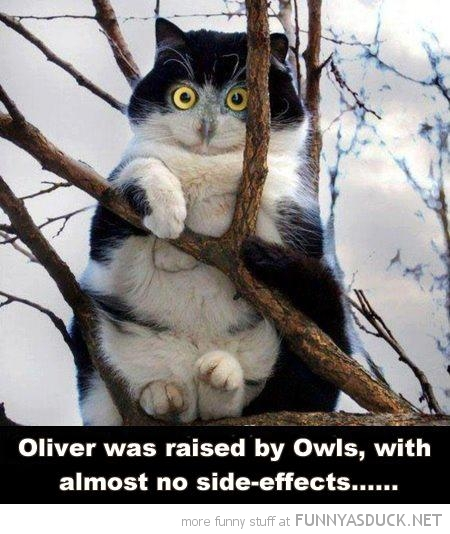 cat lolcat animal raised by owls sitting tree funny pics pictures pic picture image photo images photos lol