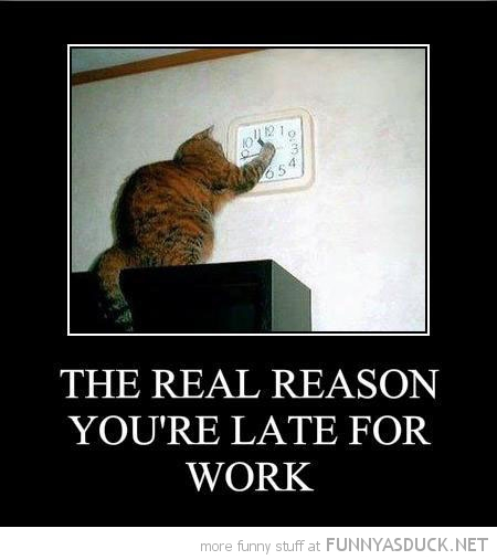 cat lolcat animal playing clock real reason late work  funny pics pictures pic picture image photo images photos lol