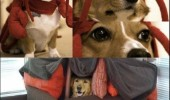 red lobster dogs animals playing come in dog fort costume box funny pics pictures pic picture image photo images photos lol