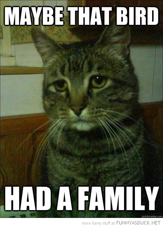 regretful cat lolcat animal sad what bird had family funny pics pictures pic picture image photo images photos lol