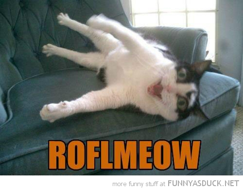 roflmeow cat laughing animal lolcat chair  funny pics pictures pic picture image photo images photos lol
