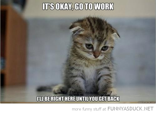 sad cat kitten lolcat animal go work i'll wait here get back funny pics pictures pic picture image photo images photos lol