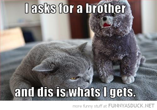 sad depressed cat lolcat animal wanted brother soft toy teddy funny pics pictures pic picture image photo images photos lol