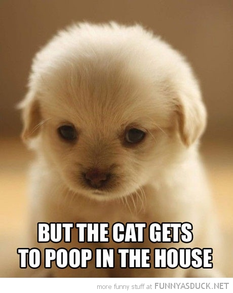 cute sad puppy dog animal but cat poop house funny pics pictures pic picture image photo images photos lol
