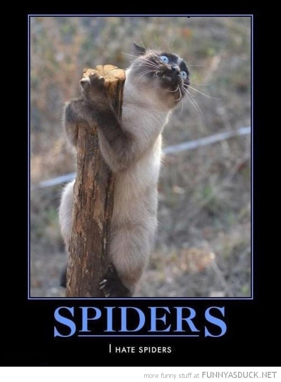 scared cat lolcat animal holding post spiders hate them funny pics pictures pic picture image photo images photos lol