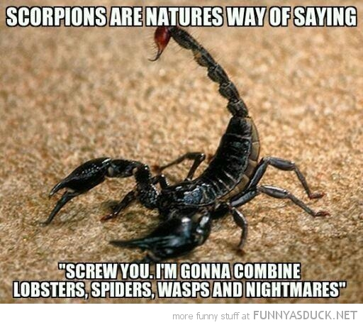 scorpions natures way screw you combine lobsters spiders wasps nightmares funny pics pictures pic picture image photo images photos lol