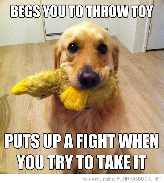 scumbag dog animal begs throw tog fight take it funny pics pictures pic picture image photo images photos lol