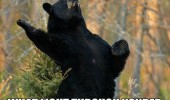 shakesbear bear standing up reciting poem shakespeare but soft animal funny pics pictures pic picture image photo images photos lol