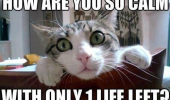 shocked surprised cat lolcat animal how so calm one life left funny pics pictures pic picture image photo images photos lol