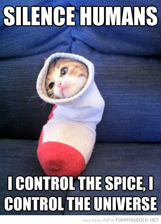 dune cat lolcat animal silence human control spice universe sand worm funny pics pictures pic picture image photo images photos lol