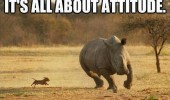 small tiny dog chasing rhino it's all about attitude animals funny pics pictures pic picture image photo images photos lol