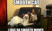 smooth cat lolcat animal paw hugging cuddling has moves funny pics pictures pic picture image photo images photos lol