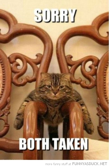 cat lolcat animal lying arm chairs both taken sorry funny pics pictures pic picture image photo images photos lol