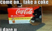 cat lolcat animal take coke dare you cola box hiding  funny pics pictures pic picture image photo images photos lol