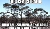 this is australia 1275 animals that could kill you funny pics pictures pic picture image photo images photos lol