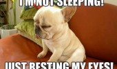 tired puppy dog animal not sleeping resting eyes funny pics pictures pic picture image photo images photos lol
