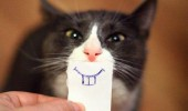 cat lolcat animal smile drawing paper tooth funny pics pictures pic picture image photo images photos lol
