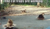 traps working cats boxes lolcats animals funny pics pictures pic picture image photo images photos lol