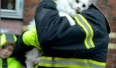 trauma cat lolcat animal saved fireman only 4 lives left funny pics pictures pic picture image photo images photos lol