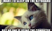 cat kitten lolcat animal thinking want sleep keyboard nobody using computer funny pics pictures pic picture image photo images photos lol