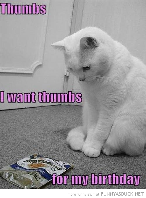 sad cat lolcat animal thumbs for birthday food packet funny pics pictures pic picture image photo images photos lol