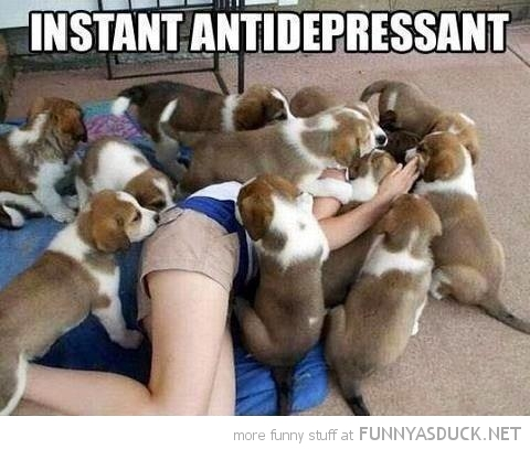 dogs puppys climbing woman pile on instant antidepressant animals funny pics pictures pic picture image photo images photos lol