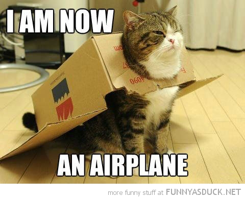 cat lolcat animal cardboard box now an airplane head funny pics pictures pic picture image photo images photos lol