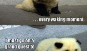 am i dog or panda animal nap first funny pics pictures pic picture image photo images photos lol