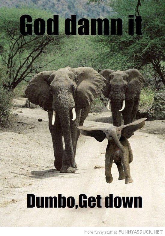 baby elephant jumping big ears animal god damn it dumbo get down funny pics pictures pic picture image photo images photos lol